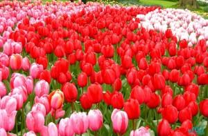 Parco Keukenof-Olanda