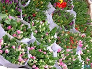 Il mercato dei fiori di Amsterdam