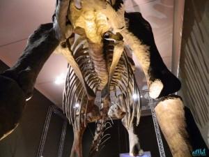 """""""Dinosauri giganti dell'Argentina"""" al Mudec, Milano"""