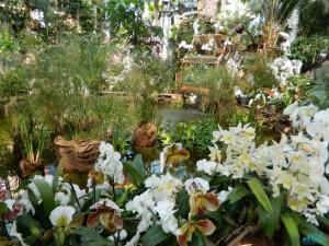 La serra con le orchidee-Mainau