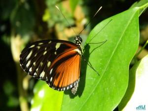 La casa delle farfalle dell'isola di Mainau