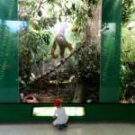 MUSEO DI STORIA NATURALE DI MILANO: I NUOVI DIORAMI DELLE FORESTE PLUVIALI