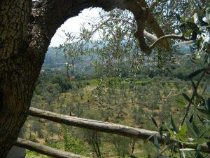 Agriturismo Il Giardino A Villa De Nobili