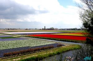 Olanda a primavera tra mulini e tulipani