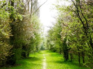 la strada dei ciliegi di villanova sull'arda