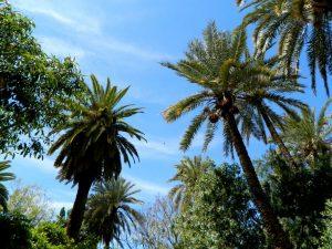 il giardino del palazzo bahia