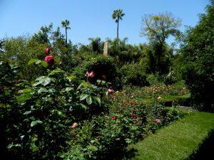 anima garden a marrakech: il giardino di andre' heller