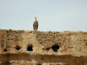in giro per la kasbah di marrakech-le cicogne