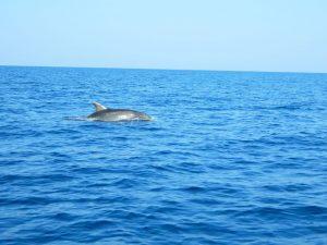 i delfii di lussino