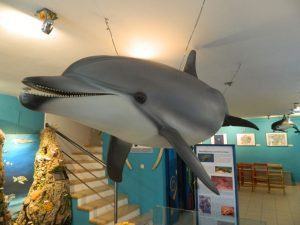 i delfini di lussino