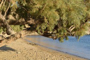 La spiaggia di Fassolou a sifnos