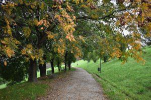 foliage a milano parco monte stella