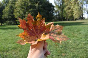 autunno al parco forlanini