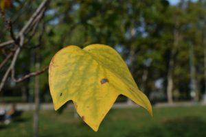 dove vedere l'autunno a milano