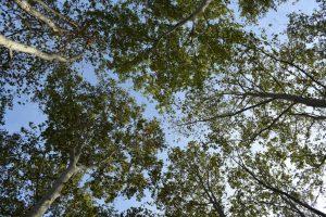 foliage al parco forlanini