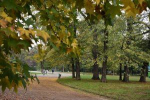 foliage a Milano al parco montanelli
