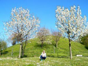 collina dei ciliegi milano