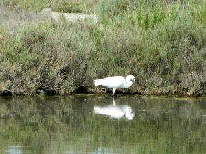 avifauna nel delta del po