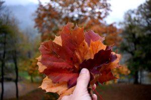 autunno a bellinzona