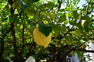 limoni di monterosso