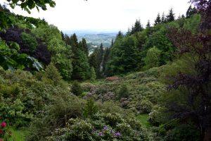 oasi di zegna la conca dei rododendri