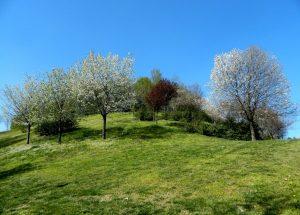 la collina dei ciliegi di Milano