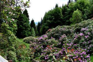 la conca dei rododendri dell'oasi zegna
