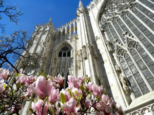 magnolie duomo milano