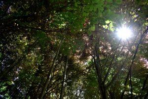 gli alberi dell'oasi di zegna
