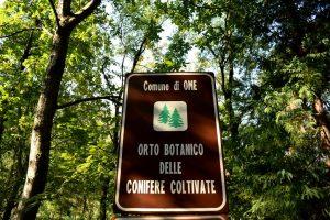 orto botanico delle conifere di ome