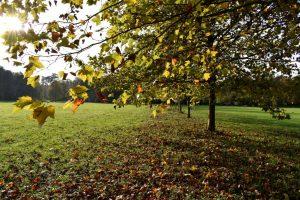 alberi d'autunno a monza