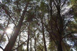 valli cupe-alberi secolari