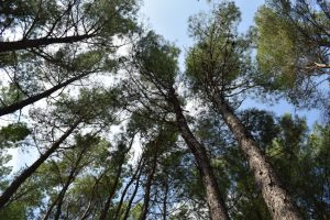 alberi secolari a valli cupe in calabria