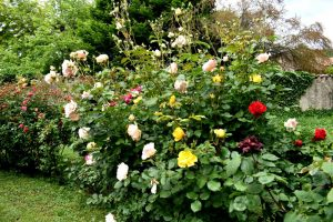 labirinto di rose