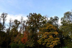 alberi del parco di monza in autunno