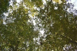 alberi al parco di monza