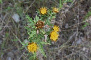 la flora di valli cupe