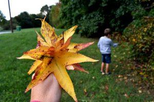 foliage al parco nord di milano