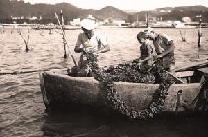 immagine storica di miticoltori spezzini