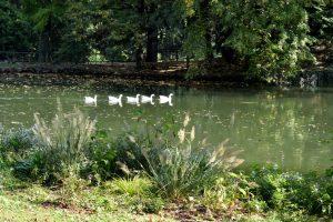 animali al parco di monza