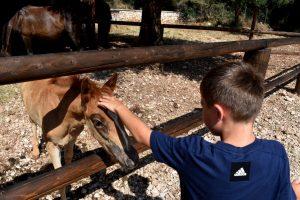 cavallini monte enos al parco odysseus di cefalonia
