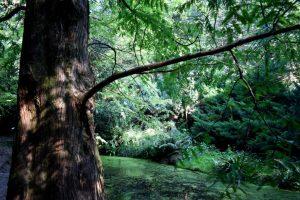 nel verde degli orti botanici di ome