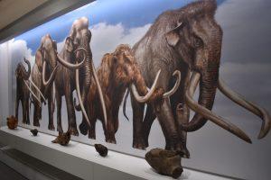 il museo di storia naturale di pavia