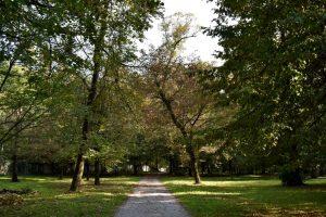 i grandi viali del parco di monza
