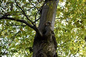 scoiattoli al parco di monza