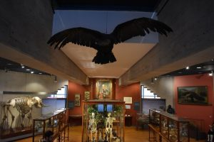 museo storia naturale a madrid