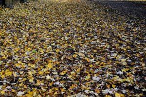 foglie a monza
